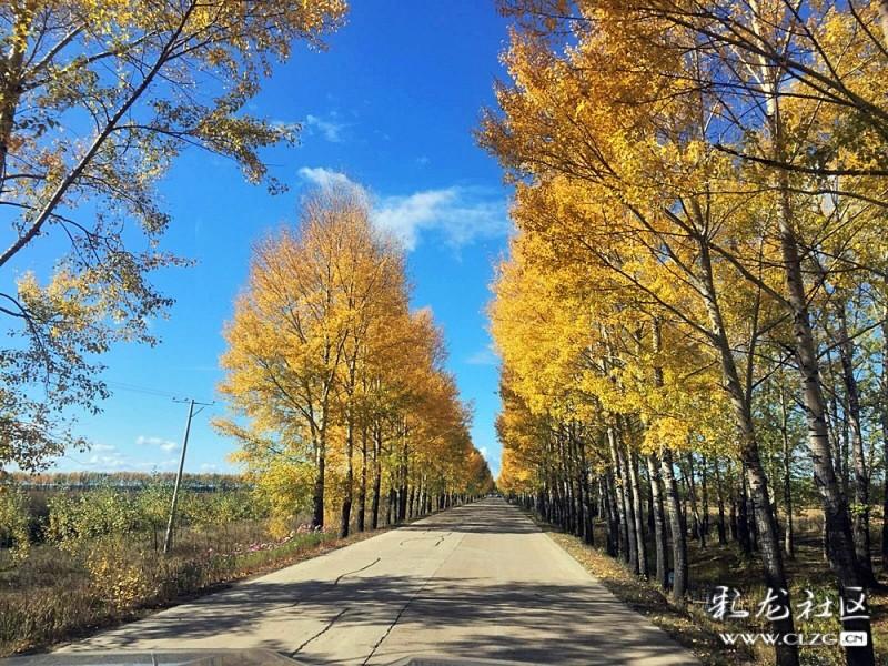 由黑河巿前往300公里外的五大连池风景区沿途秋季风光.