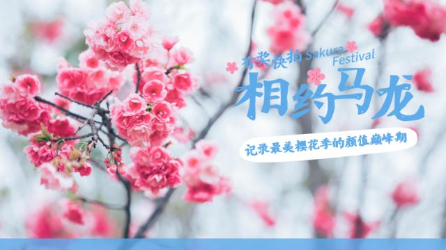 有奖快拍|相约马龙 记录最美樱花季的颜值巅峰期