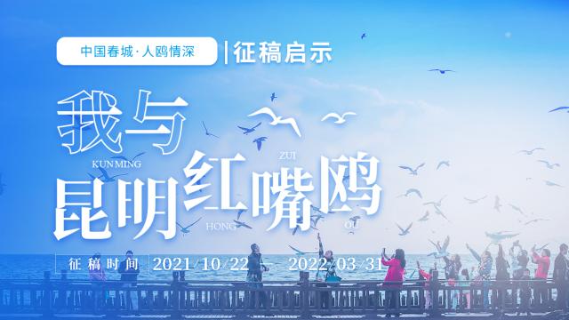 """中国春城•人鸥情深——""""我与昆明红嘴鸥""""征文启事"""